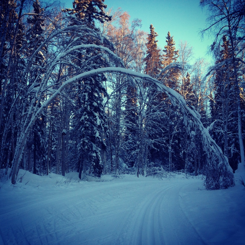 Birch arch