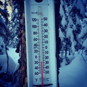 Thermometer in the woods