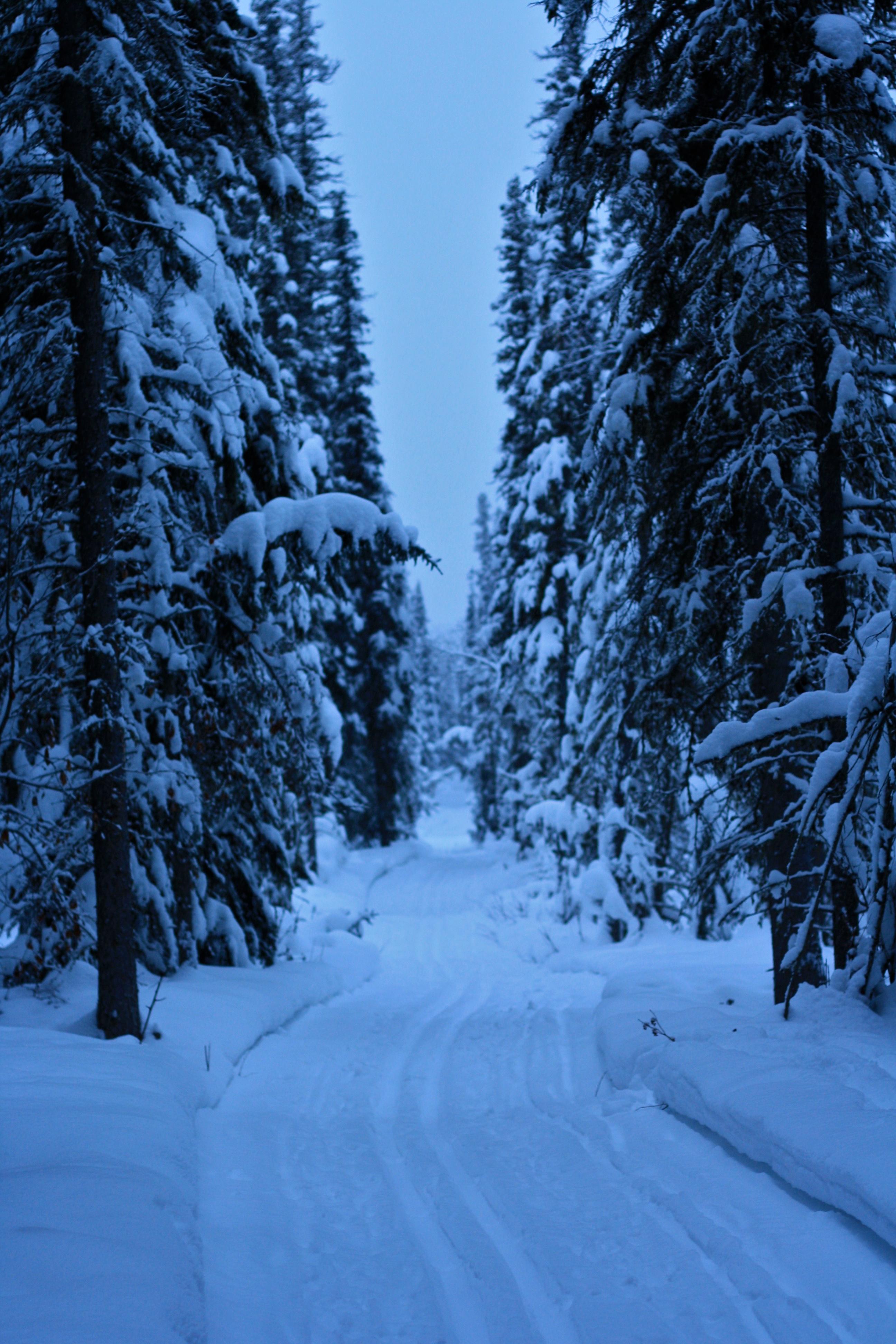 looong Ski trail
